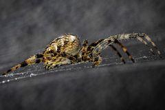 Von nah besehen :: Spinne von der Seite