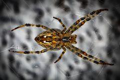 Von nah besehen :: Spinne von unten