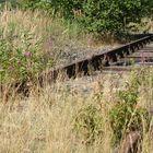 Von Natur und Blumen überwucherte Bahnschienen