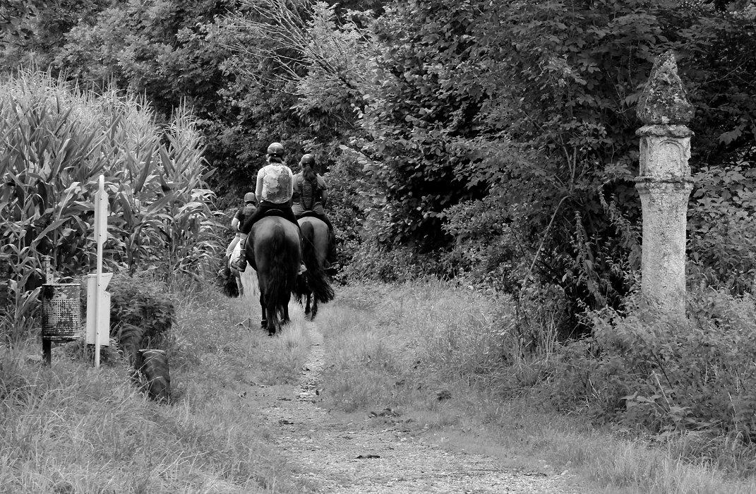Von Skulpturen, Reitern und ihren Pferden