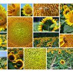 von Sonnenblumen und Bienen IV
