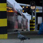 Von Tauben und Zugvögeln [Bahnraum Augsburg]