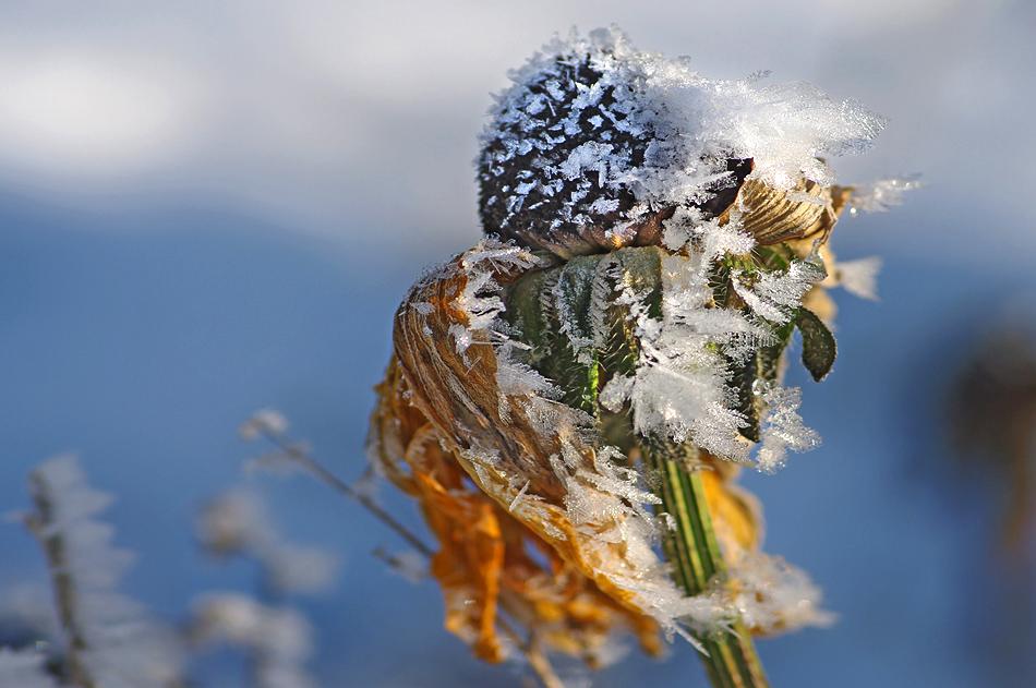 Von Wind und Eis geformt