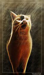 Voodoo Cat I