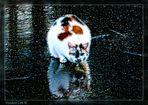 Voodoo Cat III