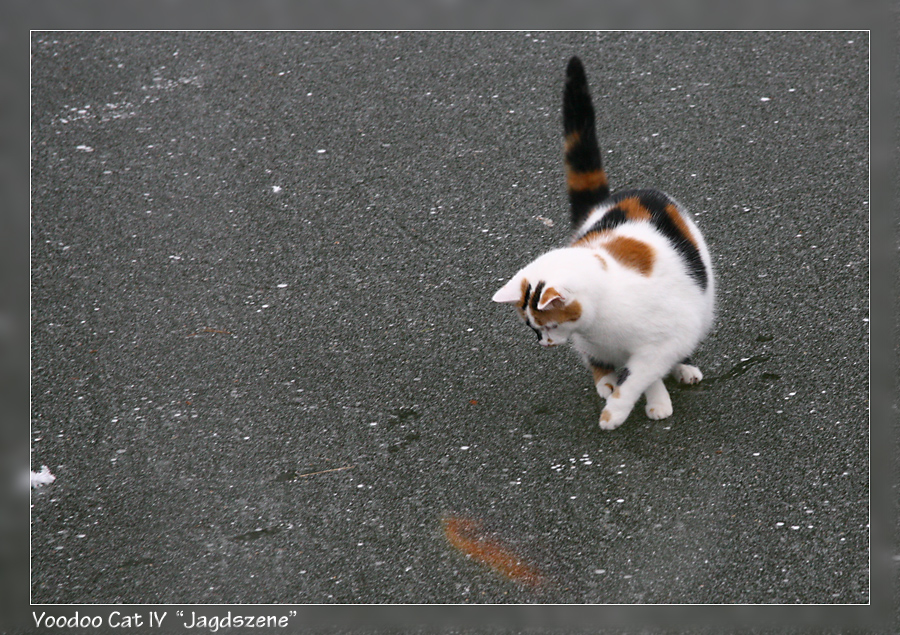 "Voodoo Cat IV ""Jagdszene"""