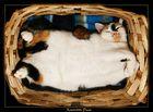 Voodoo Cats Kreativitäts Pause