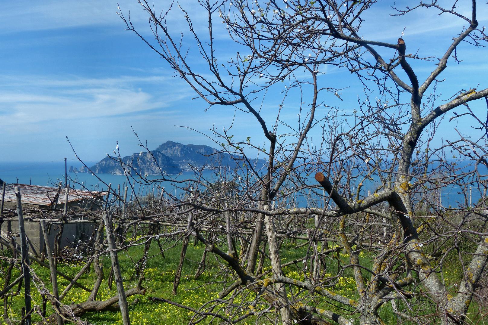 Vor Capri