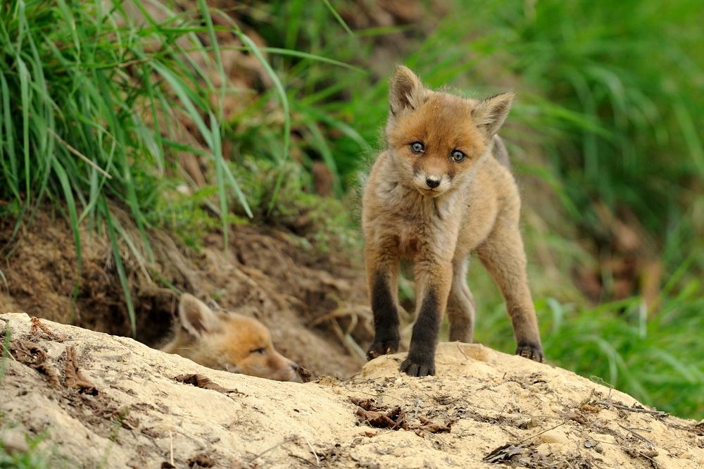 Vor dem Fuchsbau
