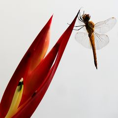 vor der weissen mauer