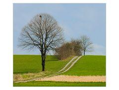Vor-Frühling naht... - oder: Großes Bild mit Elsternnest... (2.  Variante)