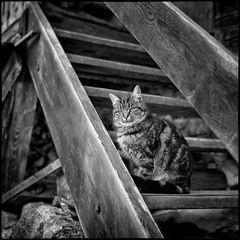 vor genau 40 Jahren aufgenommen: Katze auf einer Holzstiege