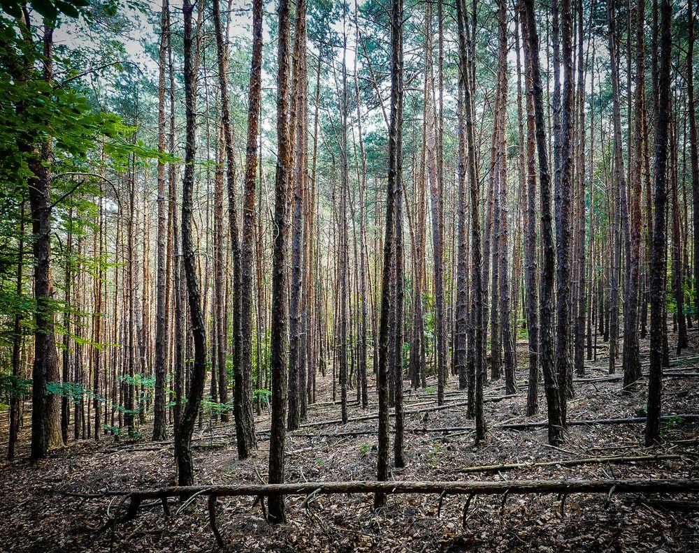 Vor lauter Bäumen den Wald nicht sehen