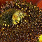 Vor lauter Pollen hätt ich sie fast übersehen