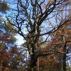 Vor lauter Wald sieht man die Bäume nicht
