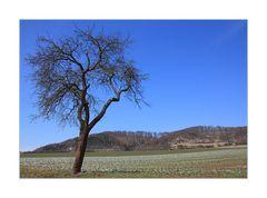 (Vor-Vor-) Frühlingsanfang...   ;-))