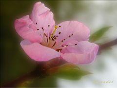 """Vorab >> ein kleiner Dank """"Die Blüte strahlt vor Freude auf!"""""""