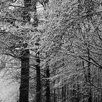 vorbei an hohen Bäumen
