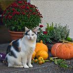 - Vorbereitung auf Halloween ... -