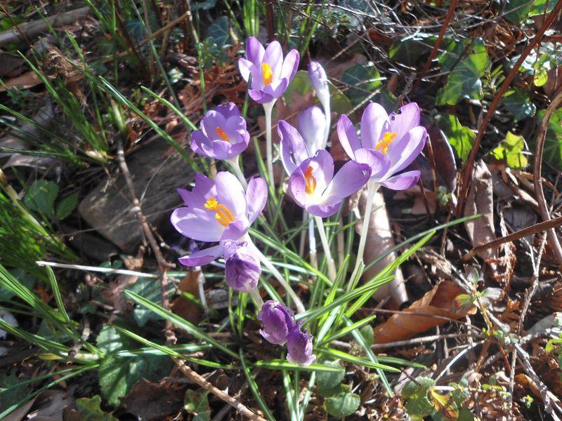 Vorboten des Frühling!