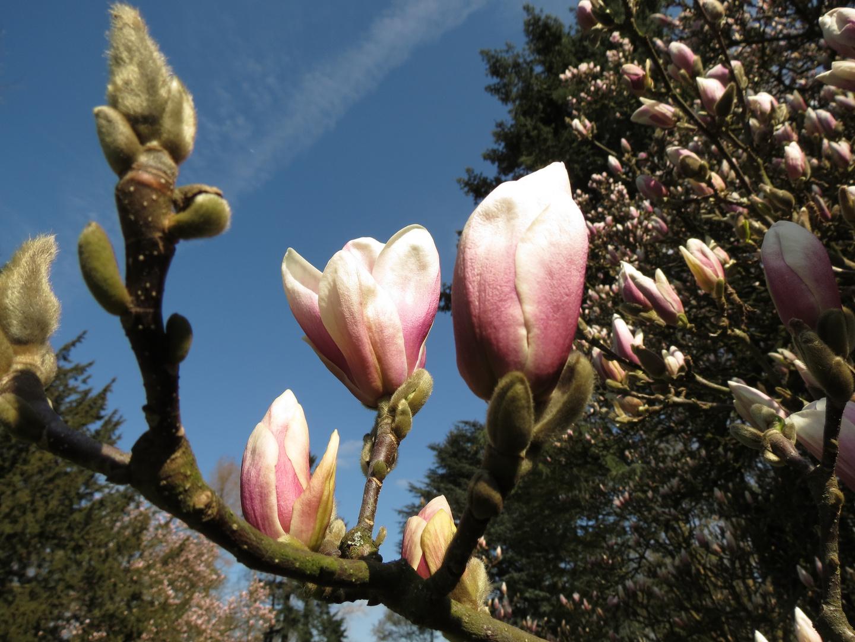 Vorboten des Frühlings streben zum Himmel