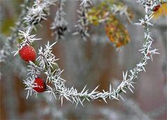 Vorboten des Winters