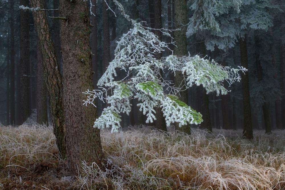 Vorboten des Winters (Fortsetzung)