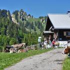 Vordere Krumbach Alpe mit Steineberg