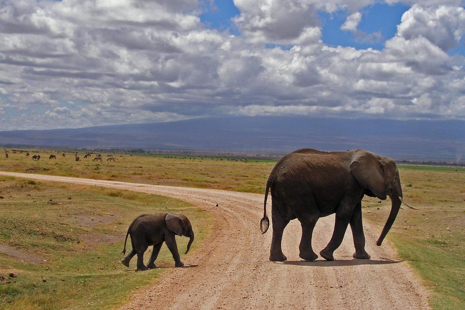 Vorfahrt für Elefanten