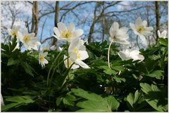 Vorfreude auf den Frühling...