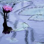 Vorfreude auf den Garten von Monet