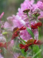 Vorfreude auf den nahenden Frühling :-)