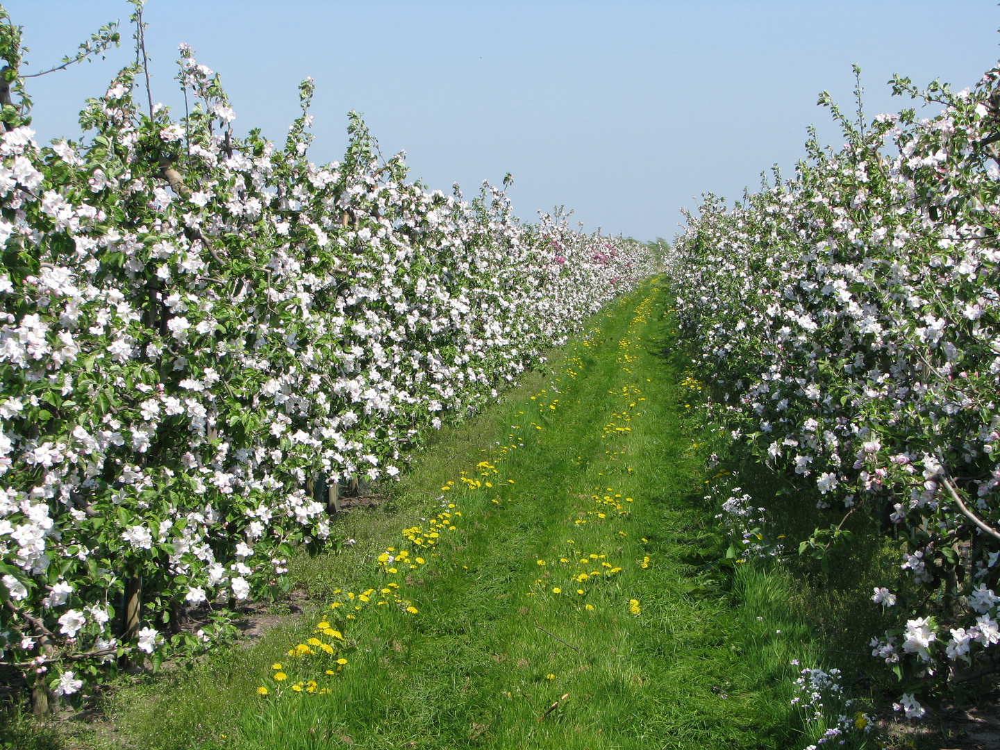 Vorfreude auf die Apfelblüte