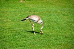 Vorführung im Vogelpark Marlow