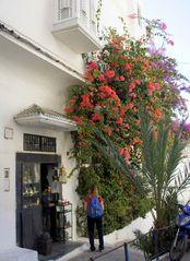 Vorgarten in Tanger .....