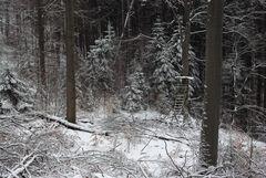 Vorgestern war noch Winter