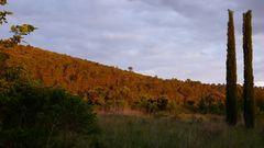 Vorland der Cevennen bei Quissac-Abendsonne