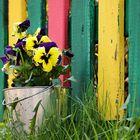 Vorm Gartenzaun...