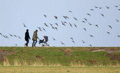 Vorschulische Vogelkunde
