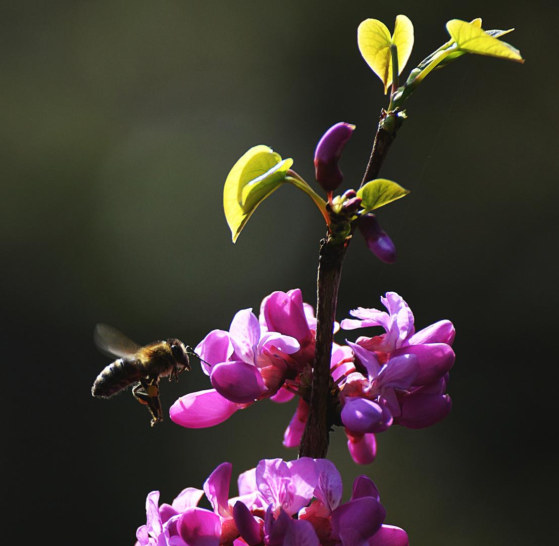 Vorsicht bei exotischen Blüten