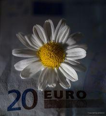 """Vorsicht """"Blüten""""...#1515##"""