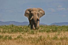 Vorsicht - Elefant