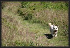 Vorsicht, freilaufender Hund