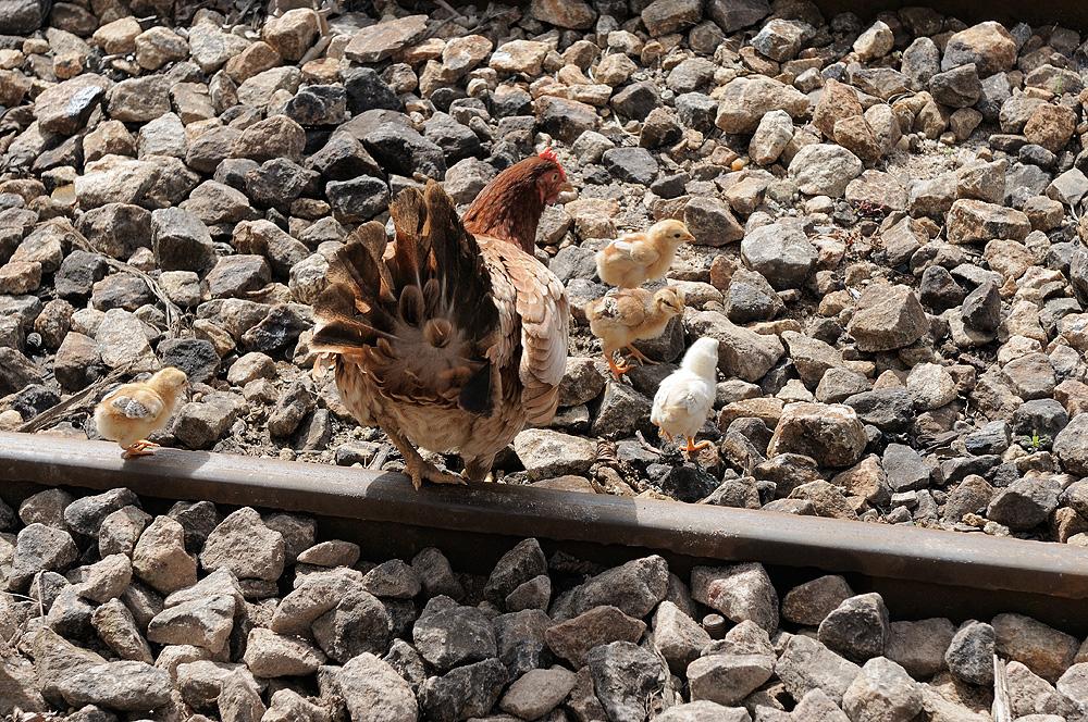 Vorsicht Kinder, der Zug kommt