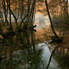 Vrelo Bosna Park