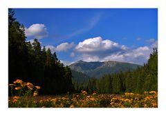 *Vue idyllique de montagne*