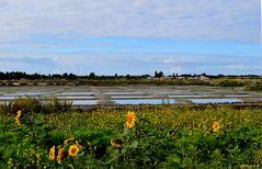 Vue sur la marais