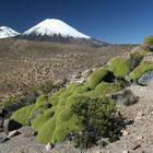 Vulkane im Lauca NP (Chile)