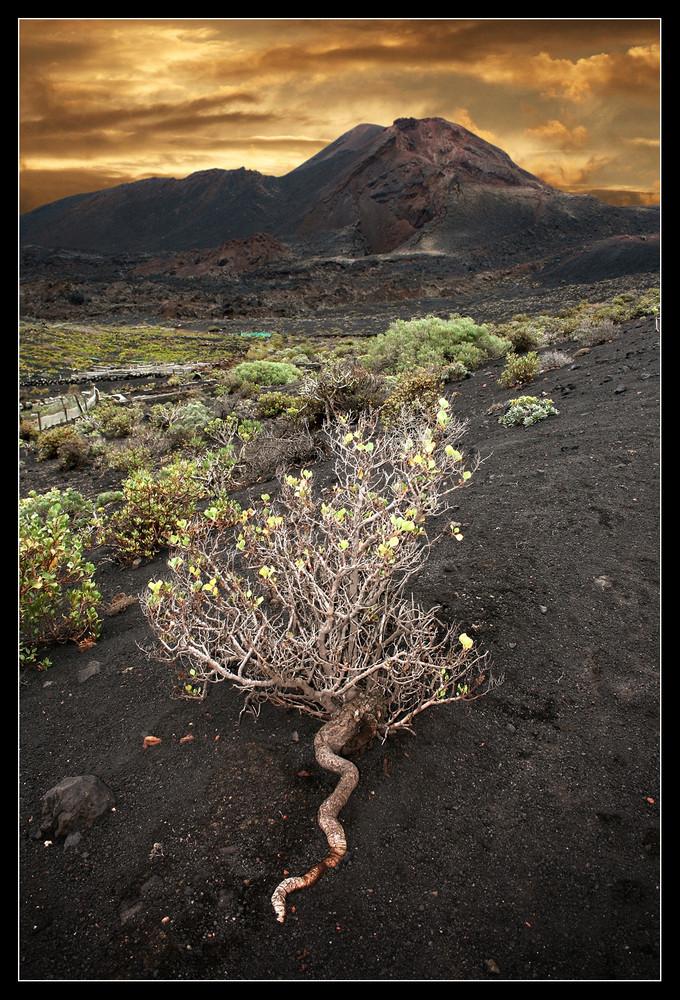 Vulkankrater bei Fuencaliente - La Palma 1