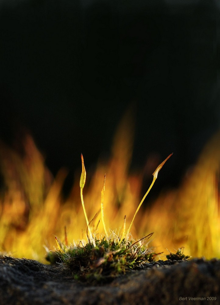 .Vuur
